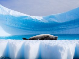 Antarctic_Dream_Seal_on_back.jpg