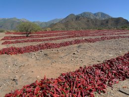Valle_Calchaquies_chillies_3414974964_7492c090ae.jpg