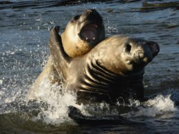 Falklands_Sea_Lions.jpg