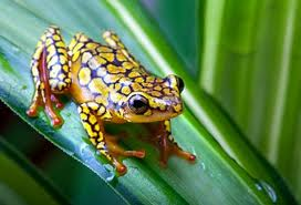 frog_-_brazillian_rainforrest.jpg