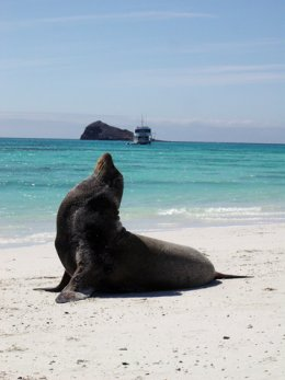 Galapagos_Seal_on_beach.jpg